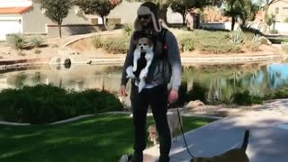 Dude figures out perfect way to walk multiple dogs
