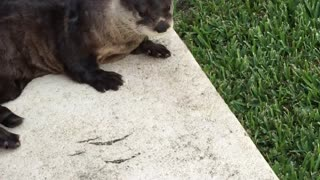 I Don't Speak Otter, Sorry - Video