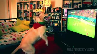 Dog celebrates Portugal goal's vs USA - Video