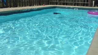 Energetic dog really loves to swim