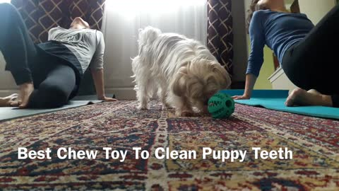 Cheap Chew Toy To Clean Teeth - my dog loves this No.1