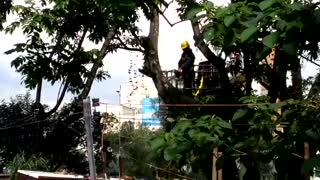 Video de caída de árboles - Video