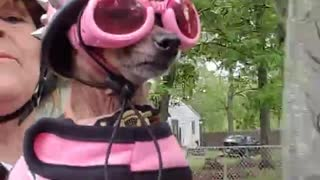 Motorcycle Pup is Pretty in Pink - Video
