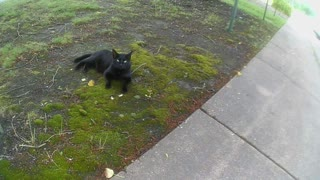 Stray/Feral Cat Look Like It Needs Love  - Video