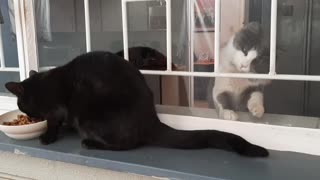 Jealous kitten tries to attack stray cat behind closed window