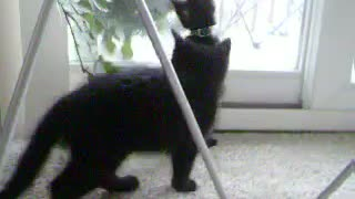 Cat playing and jumping on other car - Video