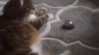 Cat Rings Bell For Service - Video