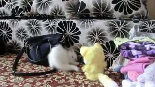 Kitten Confronts Mighty Plush Opponent
