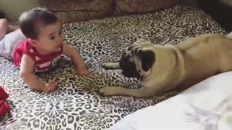 Happy baby sends doggy into howling fit