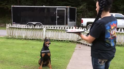 Doberman celebrates 4th birthday, blows out candle