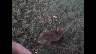 Watch This Orphaned Cottontail's Thrilled Reaction to Being Released!