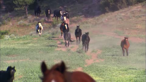 An Old Cowboy Calls For His Horses… Watch How They React!! AWESOME!