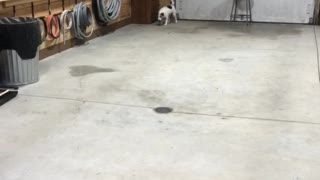 Hockey playing dog has some serious defense