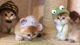 Cute Kitten Party