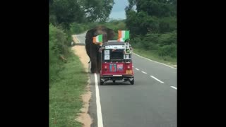 Elephant Tips Over SUV in Search of Food - Video