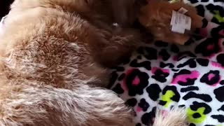 Cutest Puppy Playing