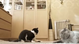 funny game of cats