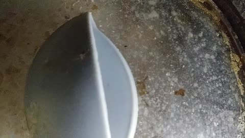 A Baby Cockroach jump on his death on a Hot Rice Cooker