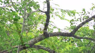 Eagle on the tree in safari-amazing eagle birds of mother nature-4k rare eagle birds video