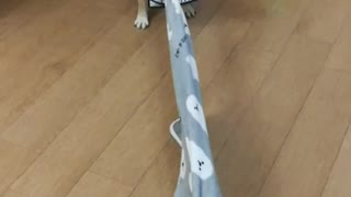 Dogs engage in epic tug-of-war battle for blanket