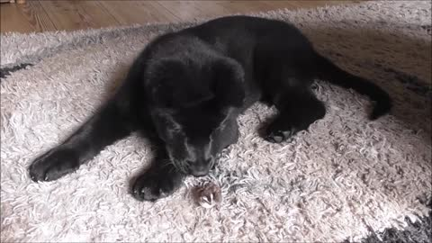 Puppy meets quail chicks, instantly falls in love