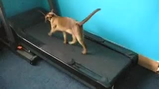 2 funny cats / kittens running on the treadmill - Video