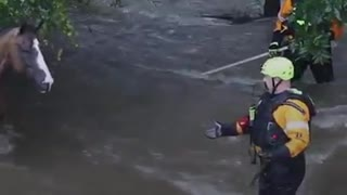 Horse Trapped In Rising Floods – Heroes Jump In To Save Her