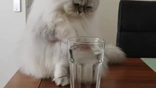 my cat likes to play with ice in cups & strong Independent cats