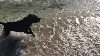 Dogs first time on the beach  - Video