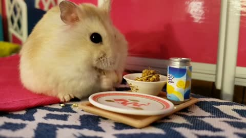 Pampered hamster eats breakfast in bed