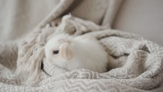 cute white rabbit just waking after a nap