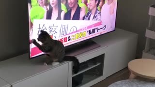 Caty Trying to Catch What is Inisde the Tv