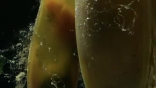 Baby Sharks in their Eggs