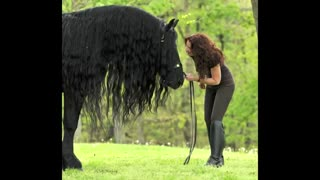 (VIDEO) The Magnificent Friesian Stallion shows his spectacular moves! - Video