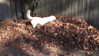 Dog Loves Leaves - Video