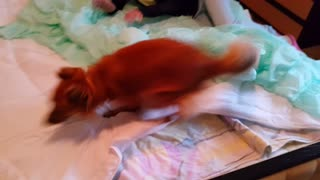 Have you ever seen a dog this excited before? - Video