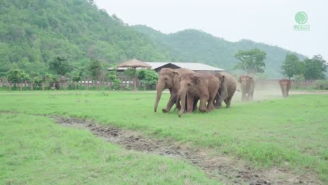 Herd Of Charging Elephants Run To Greet Newly Rescued Baby Calf