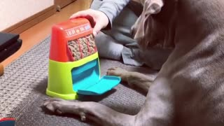 Weimaraner humorously uses dog food slot machine - Video