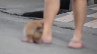 A lovely dog with short legs - Video
