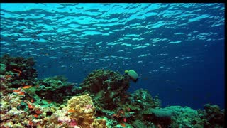 Videos of pictures of under the sea