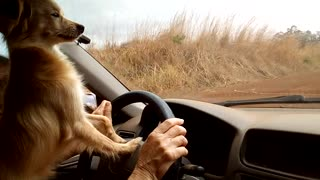 Cute Little Dog Plays with Windshield Wipers - Video