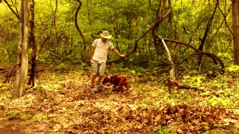 Man and dog come across a vine swing. What they do next—it's adorable