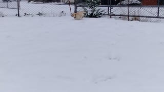Puppy Running in Snow Part 2