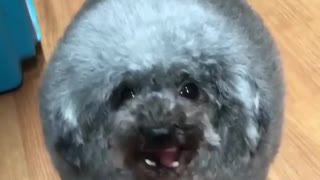 new funny kind of dogs that every one loves