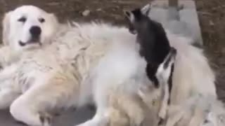 Hello dog friend, wanna play - Video