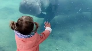 Baby scared of hippo  - Video