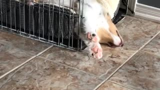 Dog sleeping with its head hanging out of cage