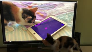 Kitten Watches Herself Playing With Tablet On TV - Video
