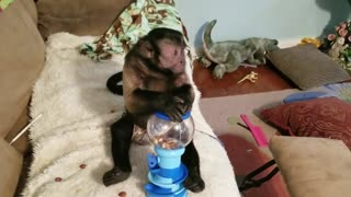 Monkey Playing With a Bubblegum Machine  - Video