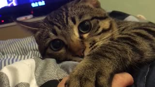 Playing with Paws